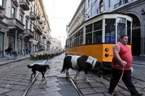 65656-L-ultimo-pastore-a-Milano-doc-di-Marco-Bonfanti